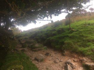 Dartmoor WistmansWood England2018 015 315x236 - Dartmoorliebe, ein magischer Wald und Cream Tea - mit dem Käsehobel in England