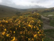 Dartmoor WistmansWood England2018 023