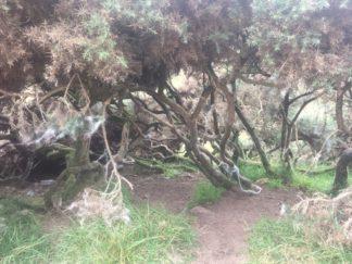 Dartmoor WistmansWood England2018 024