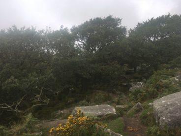 Dartmoor WistmansWood England2018 032 368x276 - Dartmoorliebe, ein magischer Wald und Cream Tea - mit dem Käsehobel in England