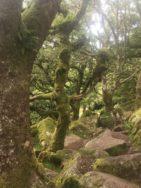 Dartmoor WistmansWood England2018 034