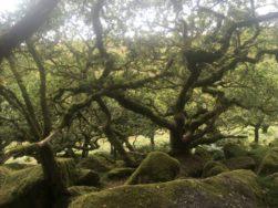 Dartmoor WistmansWood England2018 037
