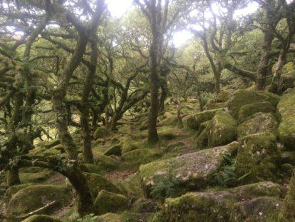 Dartmoor WistmansWood England2018 040