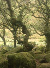 Dartmoor WistmansWood England2018 043