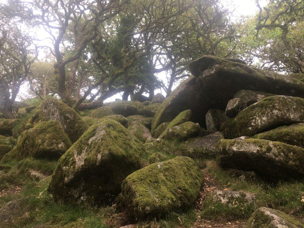 Dartmoor WistmansWood England2018 045 - Dartmoorliebe, ein magischer Wald und Cream Tea - mit dem Käsehobel in England