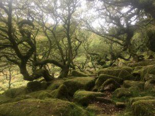 Dartmoor WistmansWood England2018 046