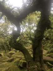 Dartmoor WistmansWood England2018 047