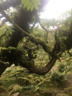 Dartmoor WistmansWood England2018 050