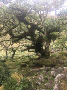 Dartmoor WistmansWood England2018 052