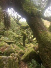 Dartmoor WistmansWood England2018 055