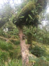 Dartmoor WistmansWood England2018 075