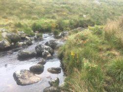 Dartmoor WistmansWood England2018 093