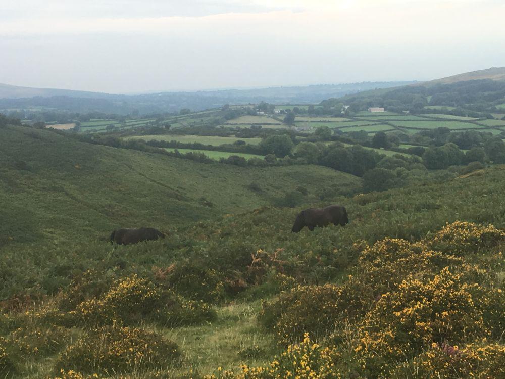 Dartmoor1 England2018 012 - Dartmoorliebe, ein magischer Wald und Cream Tea - mit dem Käsehobel in England