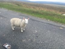 Dartmoor1 England2018 014