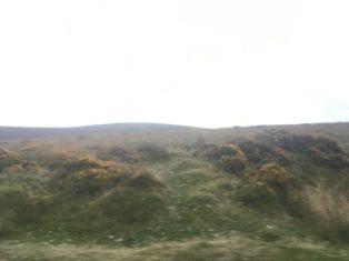 Dartmoor1 England2018 016 314x235 - Dartmoorliebe, ein magischer Wald und Cream Tea - mit dem Käsehobel in England