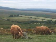 Dartmoor1 England2018 029