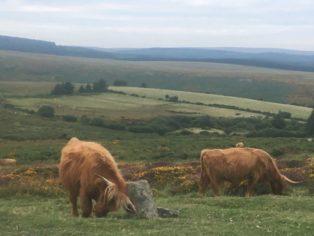Dartmoor1 England2018 029 314x236 - Dartmoorliebe, ein magischer Wald und Cream Tea - mit dem Käsehobel in England