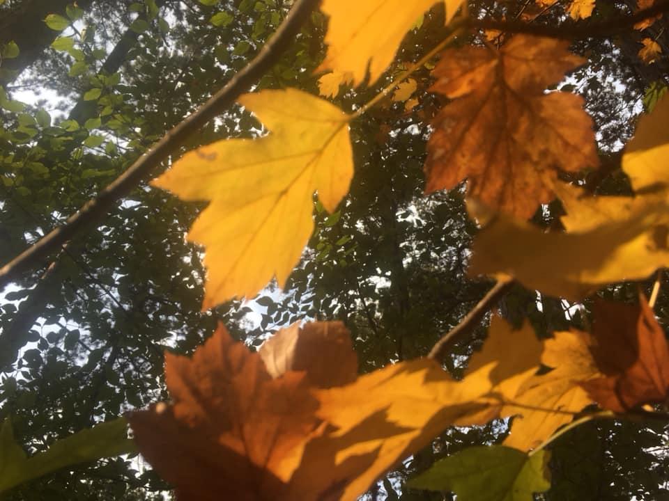 Langsamkeitzeit 1 - Herbstgedanken: Langsamkeitzeit