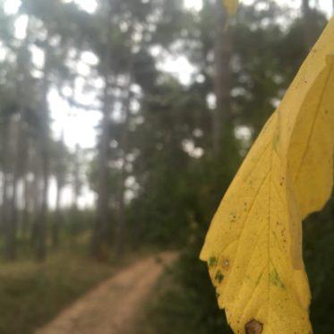 Langsamkeitzeit 6 373x373 - Herbstgedanken: Langsamkeitzeit