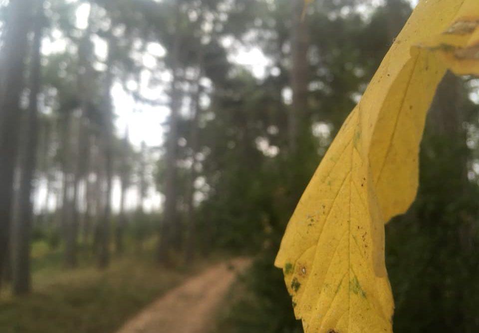 Langsamkeitzeit 6 960x667 - Herbstgedanken: Langsamkeitzeit
