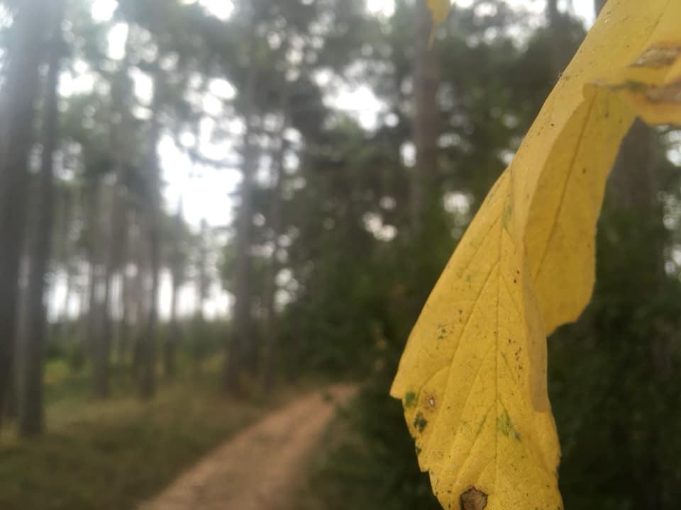 Langsamkeitzeit 6 - Herbstgedanken: Langsamkeitzeit