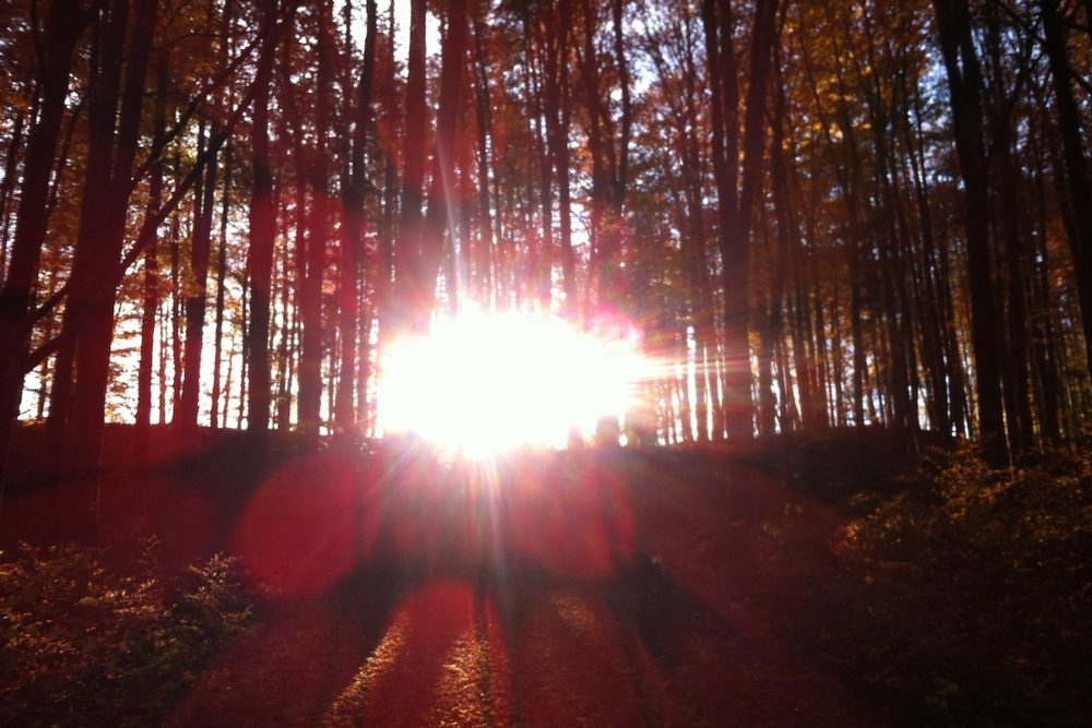 Herbstwald 1 1000x667 - Wie geht´s weiter?