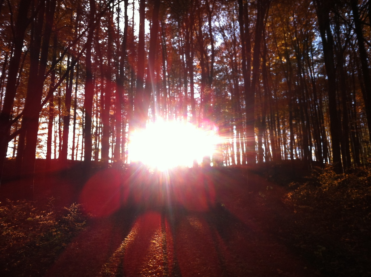 Herbstwald 1 - Wie geht´s weiter?