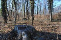 Dolmen Payerbach 007 214x143 - Der vergessene Dolmen von Payerbach