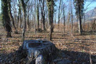 Dolmen Payerbach 007 314x210 - Der vergessene Dolmen von Payerbach