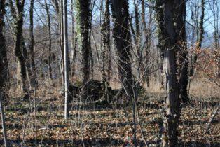 Dolmen Payerbach 008 314x210 - Der vergessene Dolmen von Payerbach