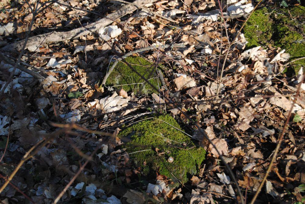 Dolmen Payerbach 020 - Der vergessene Dolmen von Payerbach