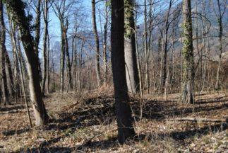 Dolmen Payerbach 022 323x216 - Der vergessene Dolmen von Payerbach