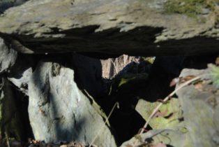 Dolmen Payerbach 036 314x210 - Der vergessene Dolmen von Payerbach