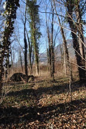 Dolmen Payerbach 045 293x438 - Der vergessene Dolmen von Payerbach