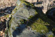 Dolmen Payerbach 047 214x143 - Der vergessene Dolmen von Payerbach