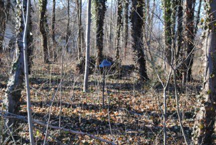 Dolmen Payerbach 053 433x290 - Der vergessene Dolmen von Payerbach
