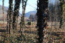 Dolmen Payerbach 055 214x143 - Der vergessene Dolmen von Payerbach