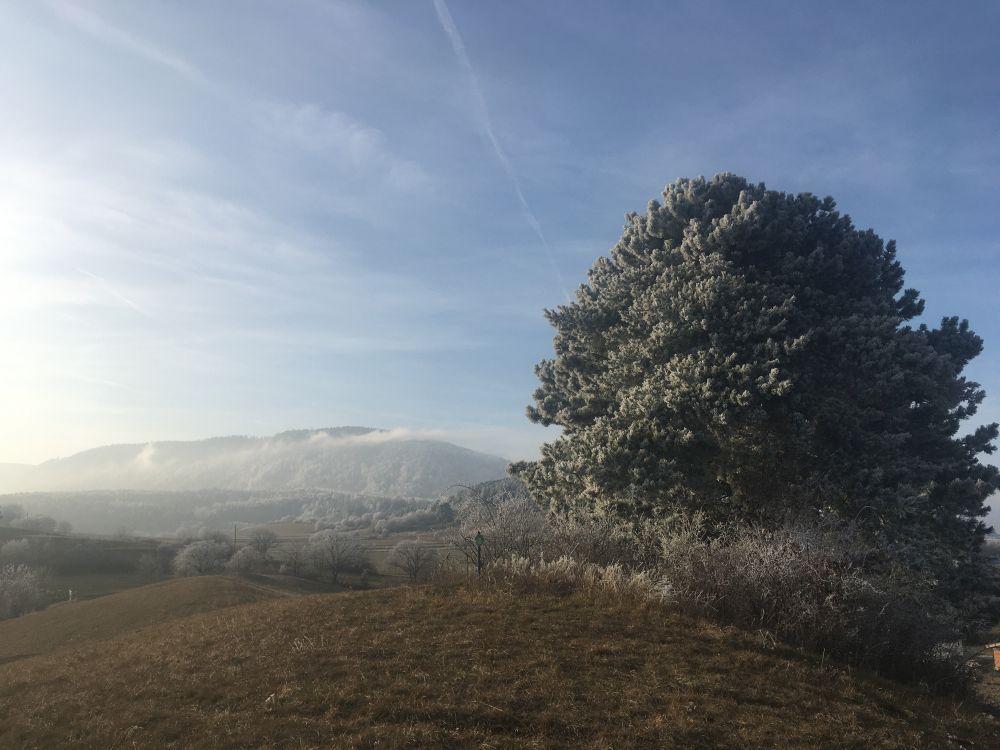 WinterNatur 026 - Lichtmess - Imbolc - Brighid: Geschichte & Ursprung
