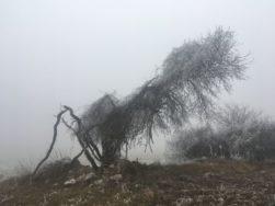 WinterNatur 058 251x188 - Lichtmess - Imbolc - Brighid: Rituale allein und in der Gruppe