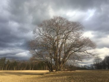 WinterNatur 090 368x276 - Lichtmess - Imbolc - Brighid: Rituale allein und in der Gruppe
