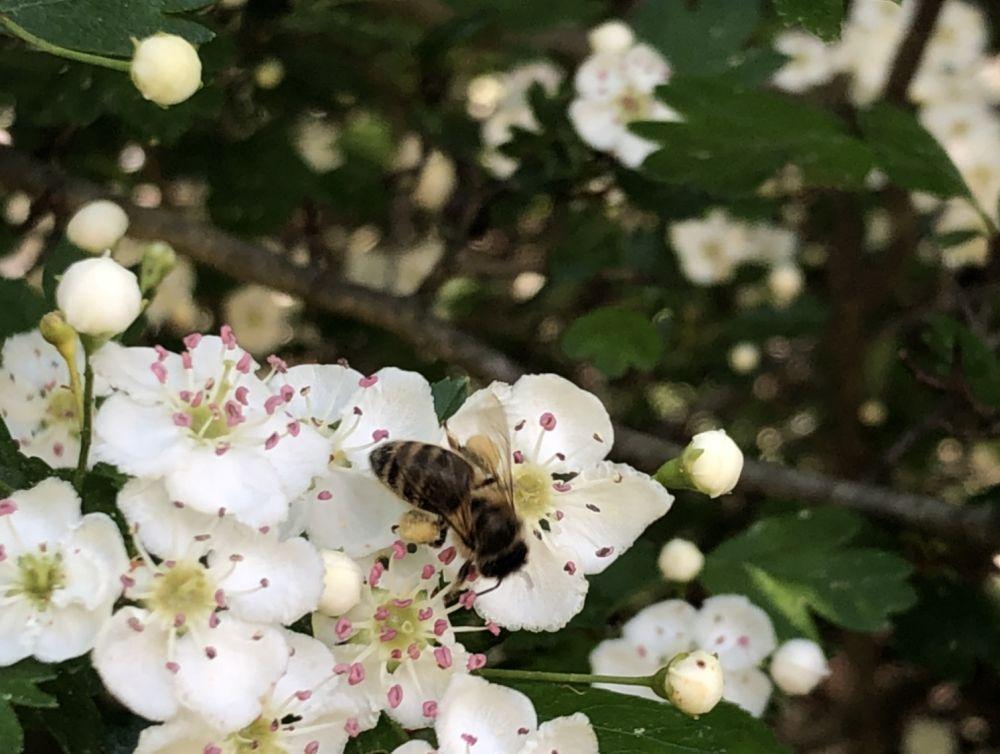 BienenBlumenRadiaesthesie 102 - Über Bienen, Blumen & Radiästhesie
