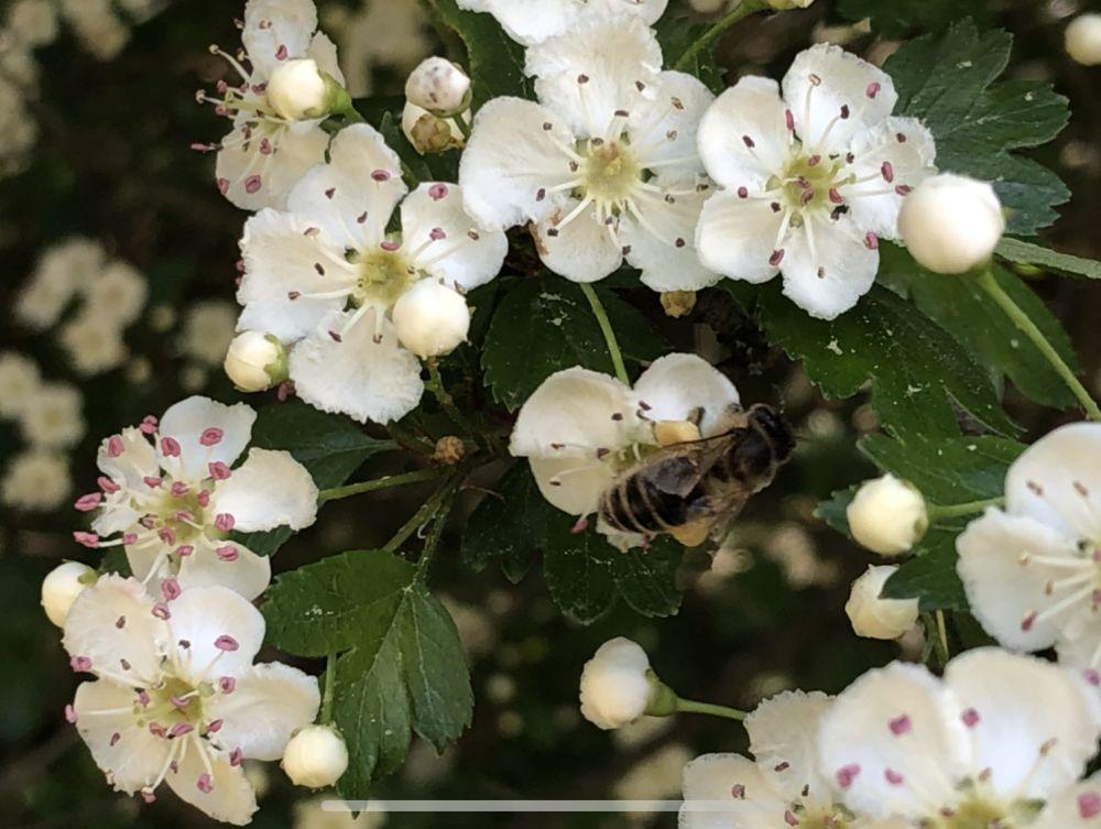 BienenBlumenRadiaesthesie 104 - Über Bienen, Blumen & Radiästhesie