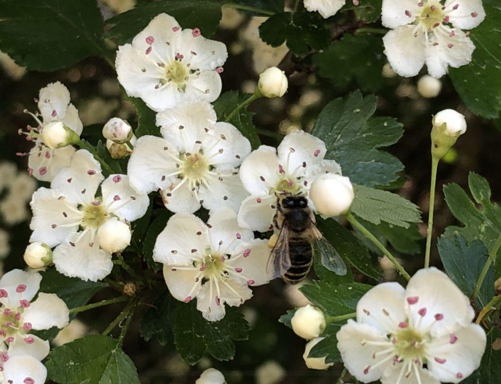 BienenBlumenRadiaesthesie 105 - Über Bienen, Blumen & Radiästhesie