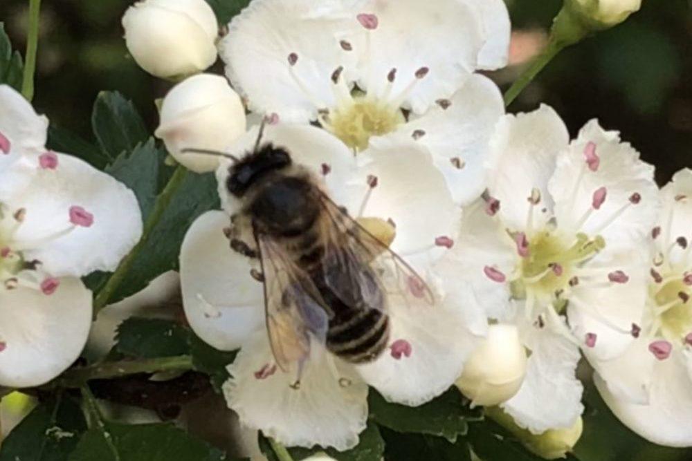BienenBlumenRadiaesthesie 106 1000x667 - Über Bienen, Blumen & Radiästhesie