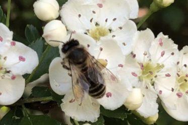 BienenBlumenRadiaesthesie 106 373x248 - Über Bienen, Blumen & Radiästhesie