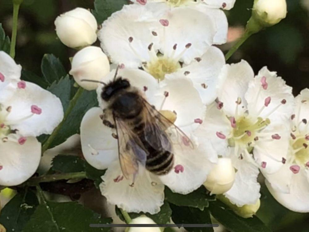 BienenBlumenRadiaesthesie 106 - Über Bienen, Blumen & Radiästhesie