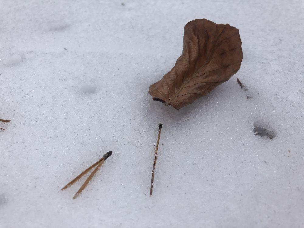 Dezember2020 008 - Wintersonnenwende & Weihnachten: Rituale allein oder in der Gruppe