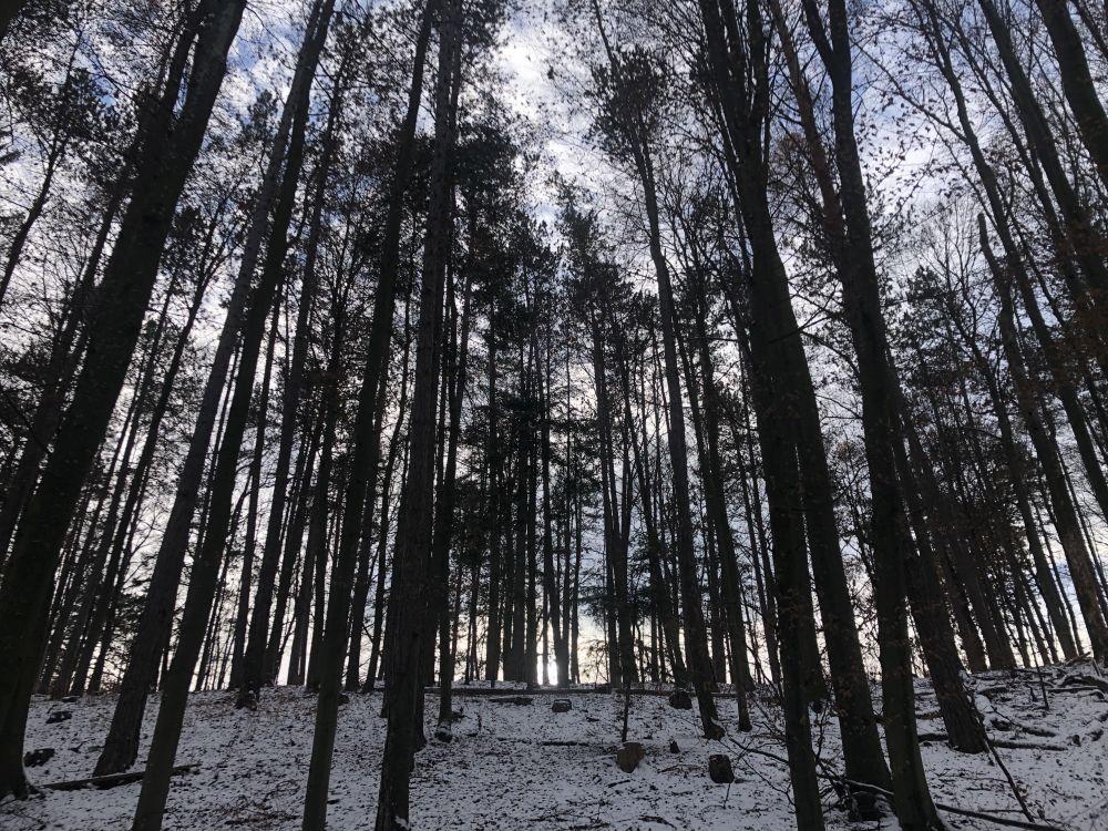 Dezember2020 009 - Wintersonnenwende & Weihnachten: Geschichte & Ursprung