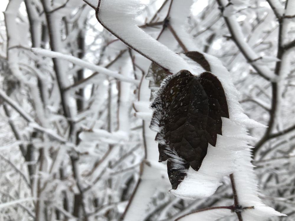Dezember2020 104 - Wintersonnenwende & Weihnachten: Rituale allein oder in der Gruppe