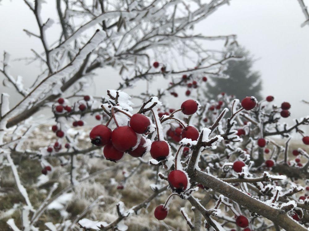 Dezember2020 109 - Wintersonnenwende & Weihnachten: Brauchtum & Symbole